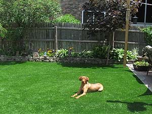 synthetic turf grass for dogs