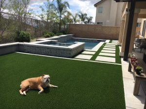 dog laying on artificial grass next to swimming pool